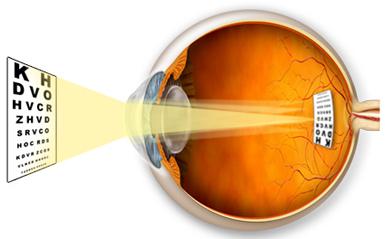 Строение глаза сообщение о зрении